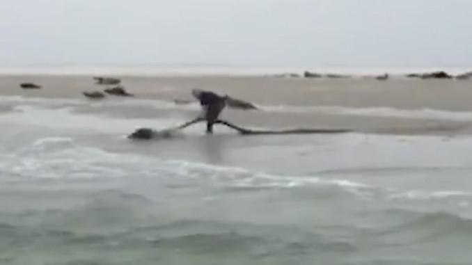 zeehond uit visnet gered