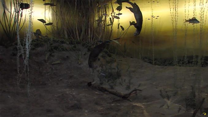 onderwaterattractie Natuurmuseum Friesland