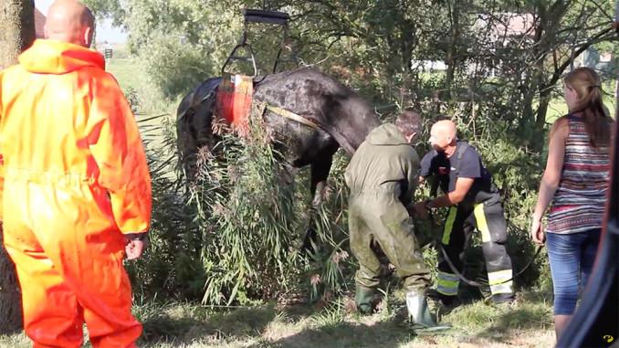 paard gered Blessuur