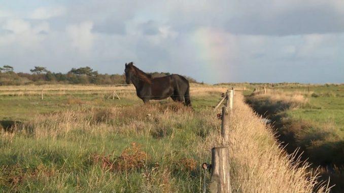Paard op Terschelling voor regenboog